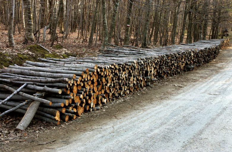 Forest Logging in Bulgaria Exceeded Planting in 2006-2012, Land Cover Observation Project Shows