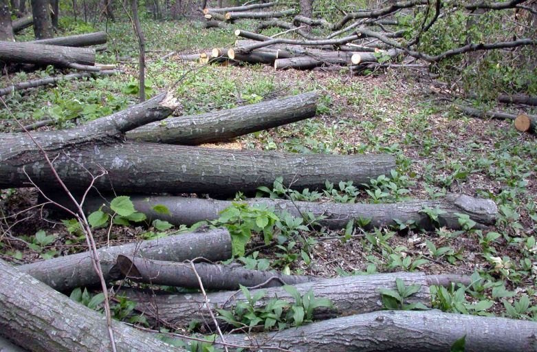 Another 103,000 Ha of Bulgarian Forests to Be Put under Protection