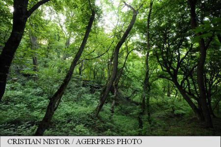 WWF Romania to release National Catalogue of Romania's Virgin and Quasi-Virgin Forests