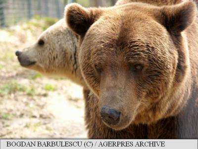 Vets from all over world visit Zarnesti Bear Sanctuary