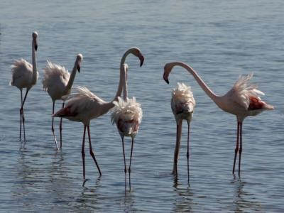 Research proves European bird protection Directive saves threatened species