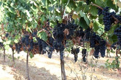 Limassol prepares for annual Wine Festival