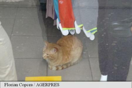 #ColourfulRomania: Cat survives sequestration by tax enforcers