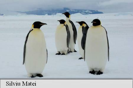 Over 700 people vying online for Antarctica cruise; AGERPRES photojournalist among favourites to win