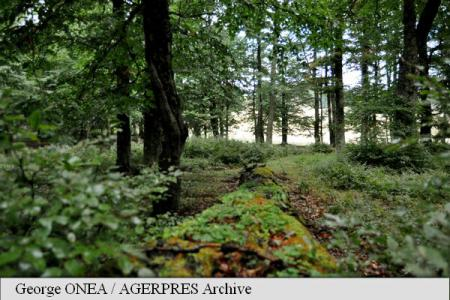Greenpeace setting camp to protect Romania's virgin forests