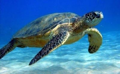 Over 1,500 sea turtle nests in Cyprus so far this year