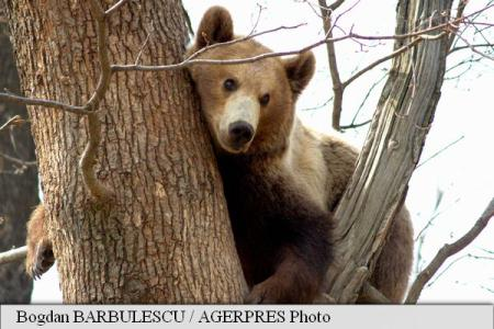 WWF starts fundraising for Europe's only bear orphanage located in Romanian Harghita County